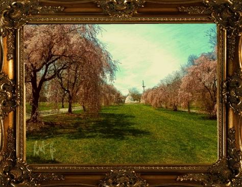 Blossom by R.M.Benson
